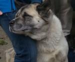 BAMBI dog pic